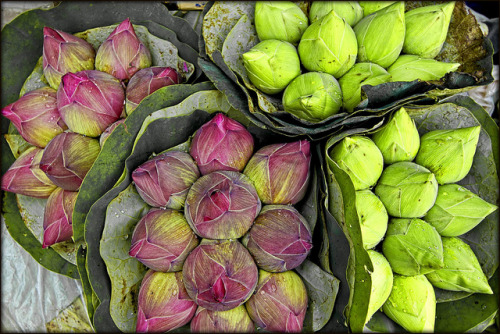 Lotus Buds | Bangkok Flower Market by I Prahin | www.southeastasia-images.com on Flickr.indian lotus…