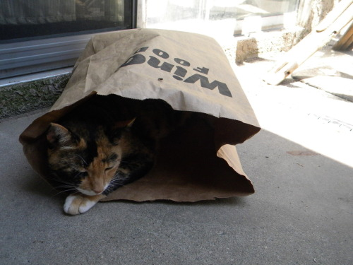 witchyelf:  Callie in a paper bag.