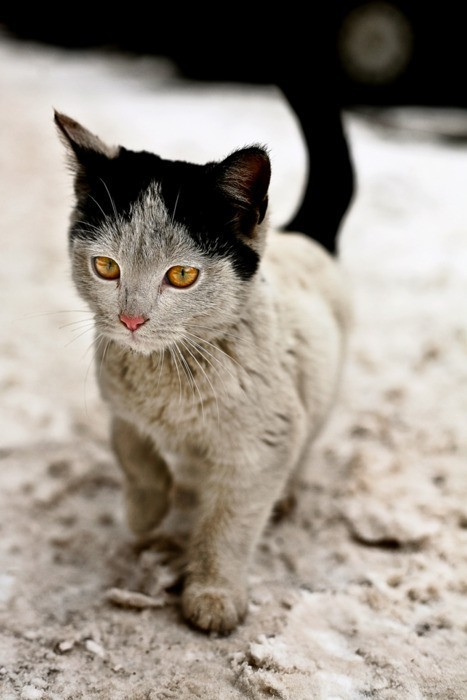 quorious:  This kitty has the cutest colouring. <3