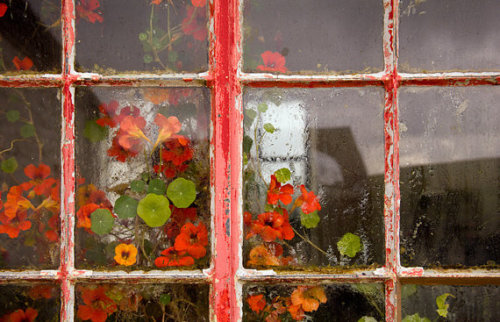"""Flowers in Skye-silversmith's window."" Isle of Skye, Scotland."