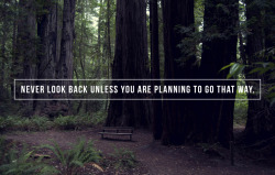 tripoddiaries:  photo 216/365: 'never look back unless you are planning to go that way' (Thoreau) © Ashley Herrin.