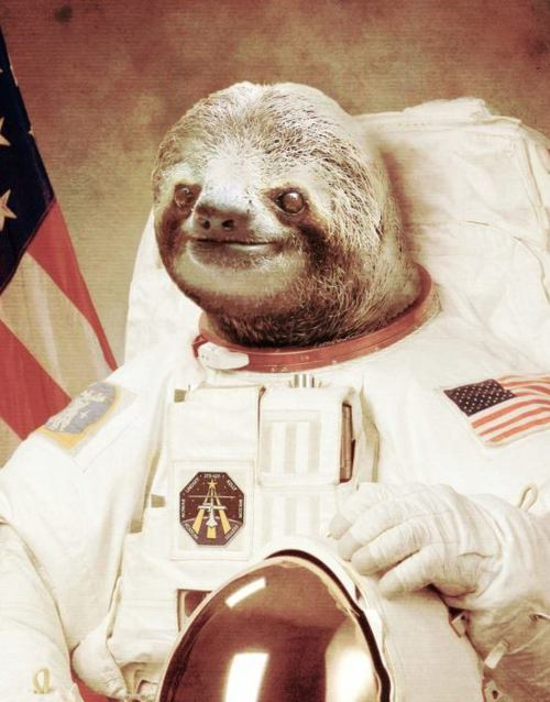 surfdog2000:  really thought I'll never not reblog animals in spacesuits