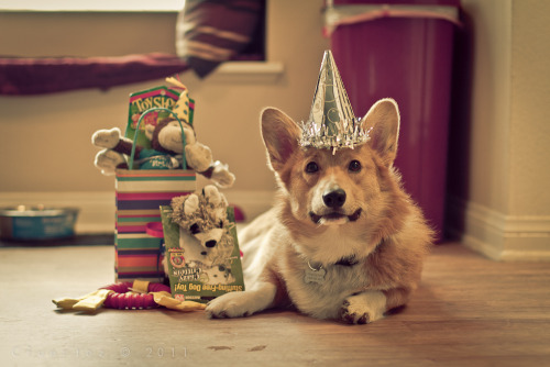 Templeton at the end of his birthday party :D