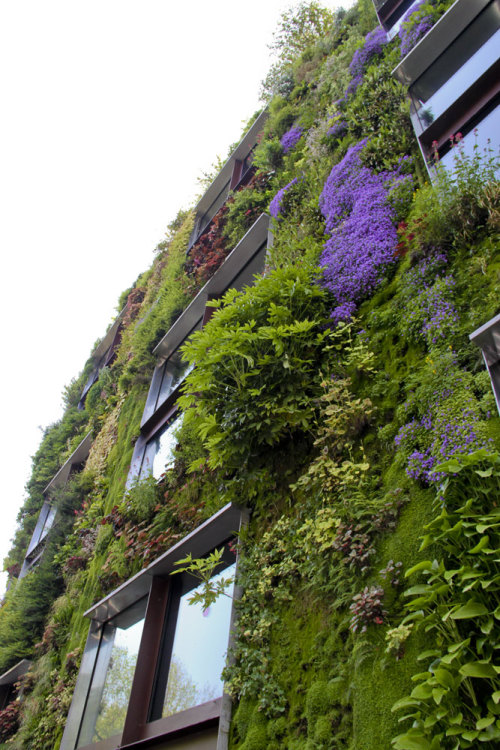 Evigglade submitted:  Vertical green flowering wall Musee du Quai Branly in Paris Photo taken by evigglade.blogspot.com