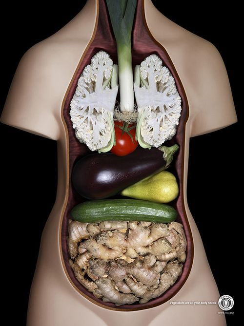 gossipchef:  Vegan Anatomy  .. and no, I'm not a vegan.  Just thought the pic was cool. —-Kelley♥