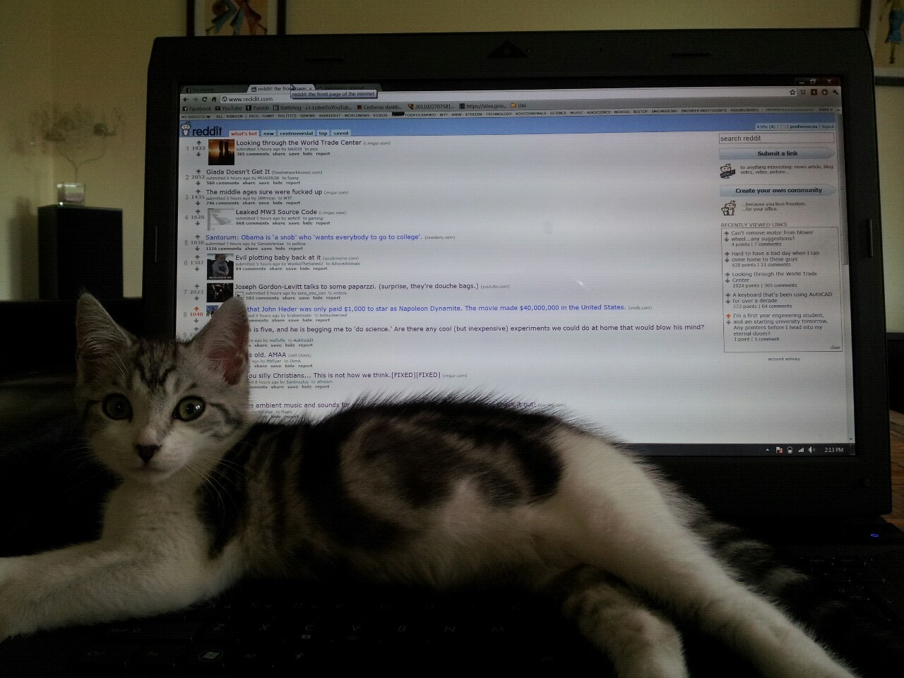 Scumbag kitten. Let me browse Reddit!!