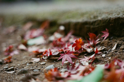 superia colors - late momiji by hugo_b on Flickr.
