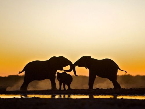Elephant Trio, Namibia Photograph by Susan McConnell (via National Geographic Photo of the Day)