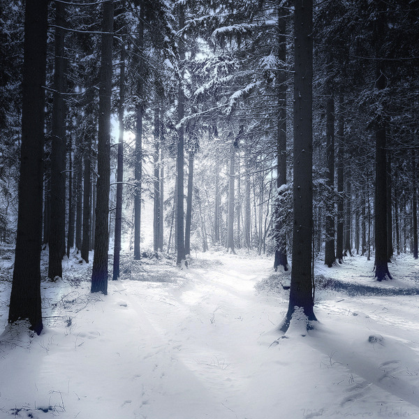 winterisntcoming:  Winter Poem II by =r3novatio