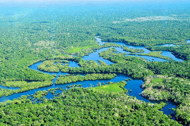 funkysafari:  Aerial view of the Amazon Rainforest, Photo by Neil Palmer