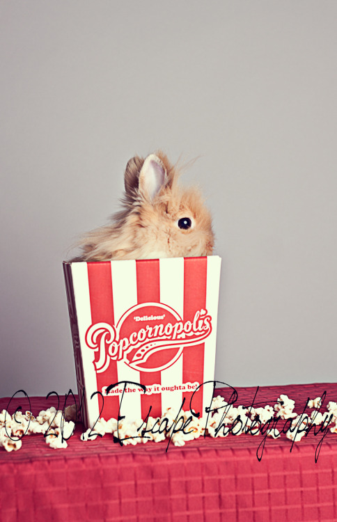 Awww, little Buns! I had saved this popcorn box forever just to get this shot done. She's so tiny and fit into it perfectly :) You can see more of the bunnies on my official blog! http://escapephotoblog.com/?p=349