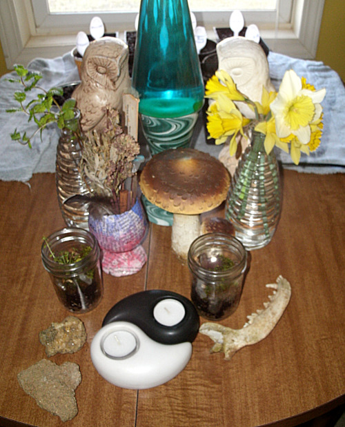 toolaree:  collection, terrariums, mint rooting and daffodils, with an army of seed starts behind it.. :)