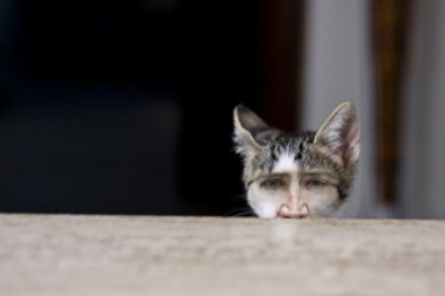 jacobsanmartin:  He watches while you sleep…nick cage cat.
