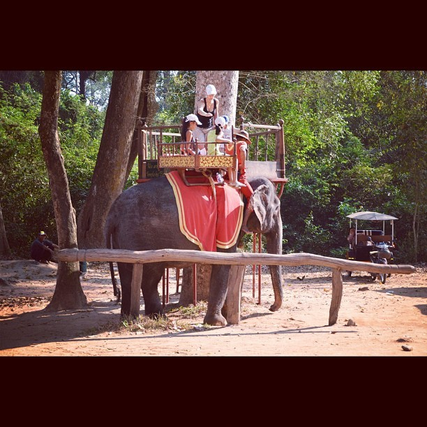 Elephant (#angkorthom, #cambodia) (Taken with instagram)