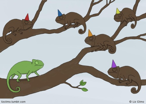 Chameleon Surprise Party
