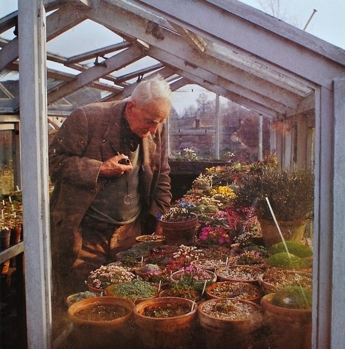 andiemiller:  J.R.R Tolkien, looking at flowers. Apparently people hated to go for walks with him because he would stop and look at every tree for 20 minutes.