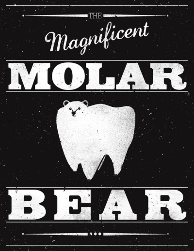 oliphillips:  Molar Bear by Zach Terrell