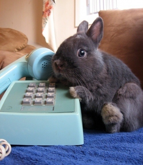hello? yes, this is bunny