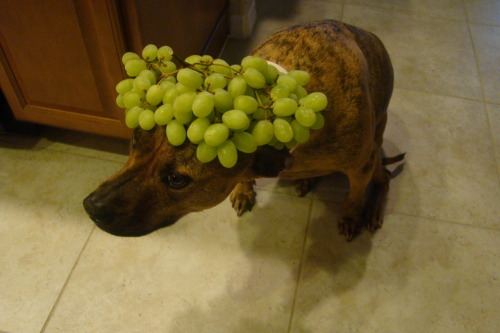 Grapes. (Please don't feed grapes to dogs, Thank you!)
