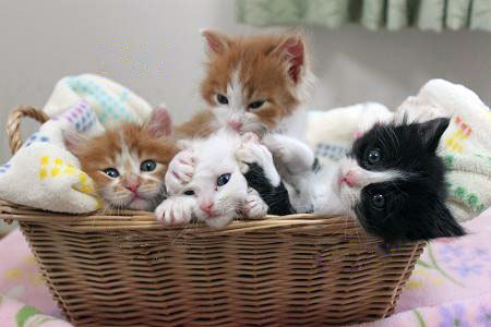 llbwwb:  Basket of Orphans by Chibi Umeharu. Todays Cuteness :)