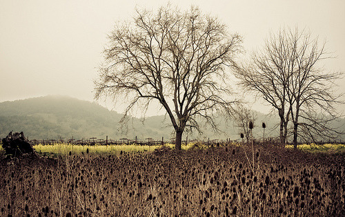 photographic-energy:  winter in napa valley (by learydotmark)  here please.