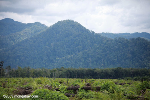 "Oops, 5000 acres of your land cleared for palm oil. Sorry. A subsidiary of agribusiness giant Cargill has paid a $1 million fine for clearing land for oil palm outside its concession, a move that could serve as an important example for palm oil developers operating in Indonesia, according to Greenomics-Indonesia, a Jakarta-based environmental group.The fine was levied on Cargill subsidiary PT Hindoli after the company notified local authorities and the Ministry of Forestry that it had accidentally cleared about 2,000 hectares of land beyond the boundary of its formally licensed area in South Sumatra Province. The clearing, which took place in 2005, involved agricultural land that was still zoned as ""forest"" by the Ministry of Forestry even though it lacked exploitable timber.Read more:http://news.mongabay.com/2012/0223-hindoli_fine_palm_oil.html#ixzz1nZ1Fkkx4"