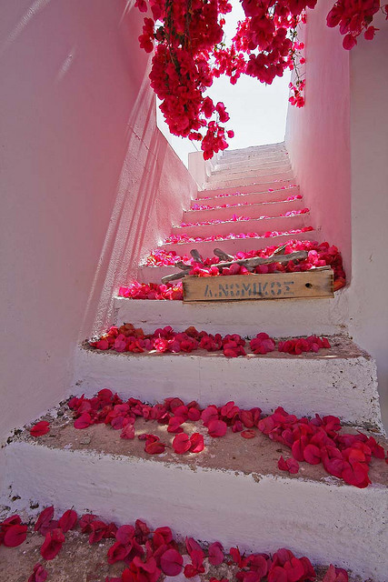 maxitendance:  Rain of Bougainvillea Flowers on a Starway