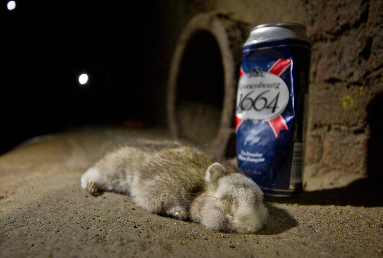 A dead Panda faced Rat :-)  Photo Copyright property of Nicholas Adams aka www.nicholas-adams.co.uk