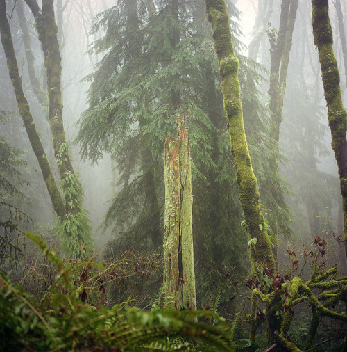 the perfect park by manyfires on Flickr. Oregon.