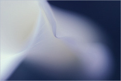 Flower Macro: Calla Lily Macro: IMGP0831 by Bahman Farzad on Flickr.