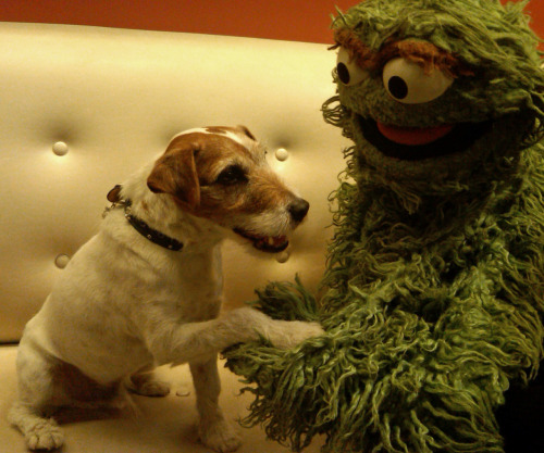 sesamestreet:  The Artist's Uggie didn't get a Best Dog nomination, but he still got an Oscar!  OMG
