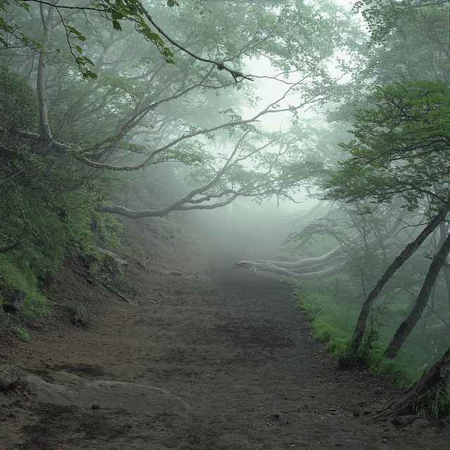 Suicide Forest, Aokigahara, Japan, 2008 by Simon Vahala on Flickr.