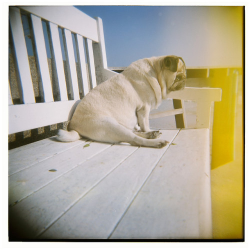 My First Holga by ubon on Flickr.
