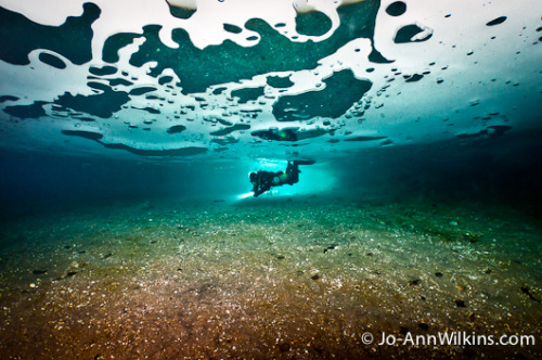 Have you ever imagined diving under ice?  Our friend Jo-Ann Wilkins has written a fascinating article about ice diving in her native Canada. So many beautiful under-ice photos, stories and information.  Check it out: http://www.uwphotographyguide.com/diving-under-the-ice