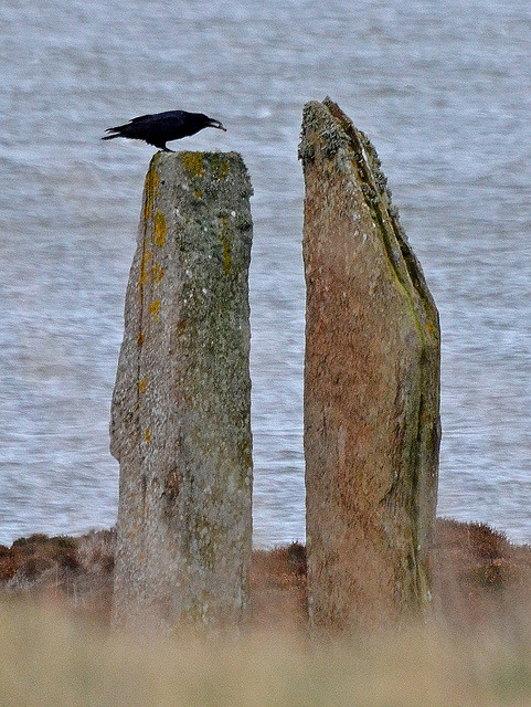 Raven on a standing stone by JanuaryJoe on Flickr.