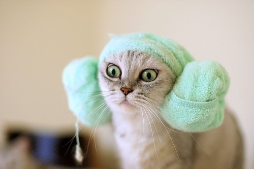 """I am a member of the Imperial Kitty Senate on a diplomatic mission to Alderaan.  Now look into my eyes…"""