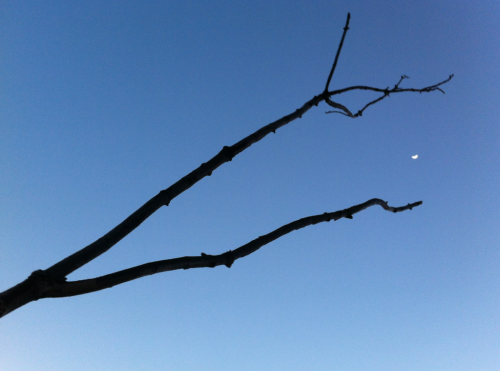 project365: Tree branch and the Moon. (119/365)