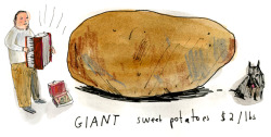 Gaint Sweet Potatoes