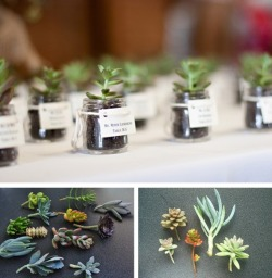 simple succulent place settings