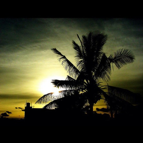 #sunset #sky #beach #tree #instadaily #instagram #iphoneography #iphonesia #instagood #instagramhub #ig #igers  (Taken with instagram)