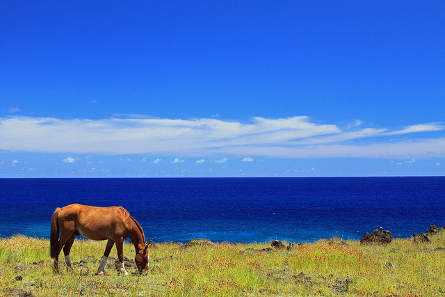 pacific horse by MattJP on Flickr.