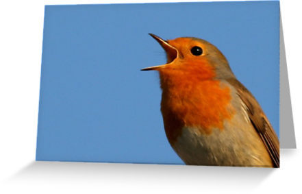 """Robin Redbreast"" Greeting Cards & Postcards by taiche 