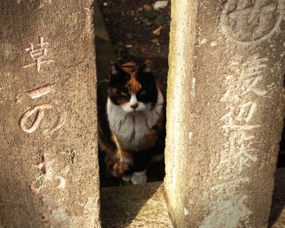 as-backspace:  日本猫。 Japanese cat. at temple.