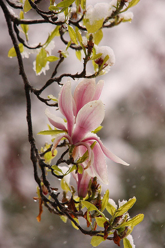 Early English Spring - but then a delicate April surprise (by JB photographer)