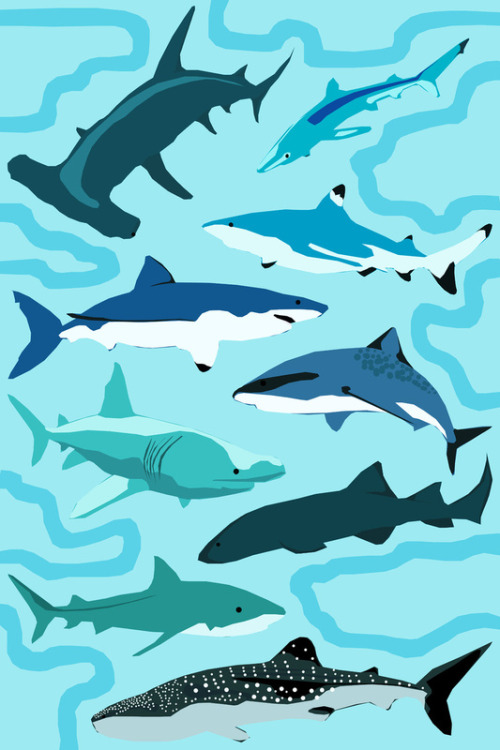 New artwork - sharks