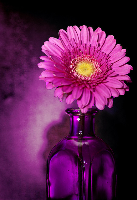 agoodthinghappened:  Pink & Purple by Photo Amy on Flickr.