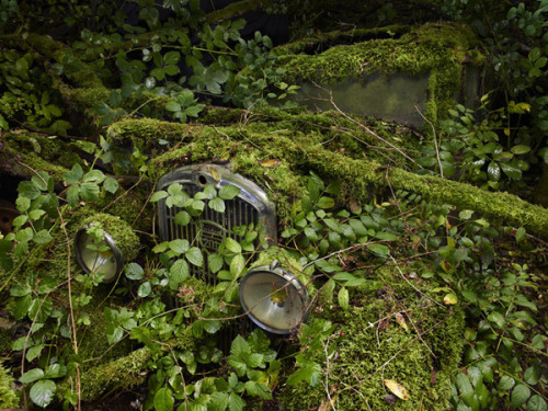 wasbella102:  Car, Reclaimed by Nature: Peter Lippmann