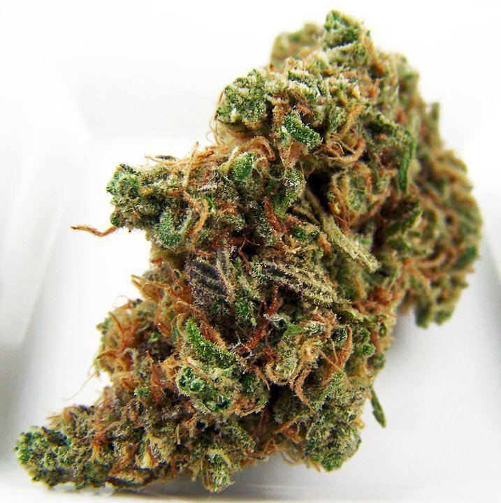 chronicnugs:  Blue Dream