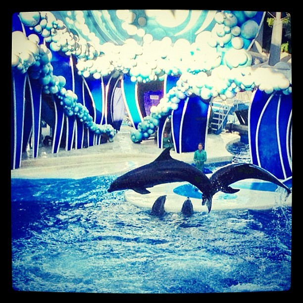 Great @seaworld #dolphin show (Taken with Instagram at Sea World)