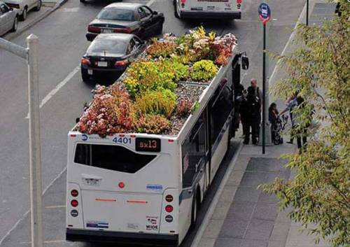 obon:  Bus Roots - if every bus in NYC became a mobile roof garden, it would create 35 acres of new green space  more here.
